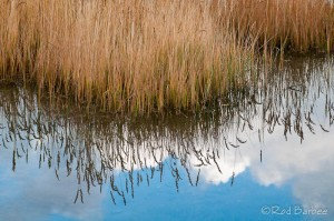 Grasses and reflection at Schwabacher's Landing