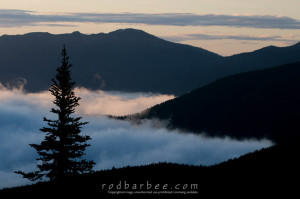 Tree silhouettes, clouds and ridges, sunrise along the Hurricane Ridge Road, Olympic National Park, WA