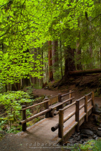 Bridge over Sol Duc trail