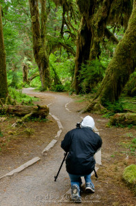 Hall of Mosses trail in the Hoh Rainforest