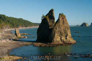 Seastacks on Rialto Beach, Olympic National Park, WA