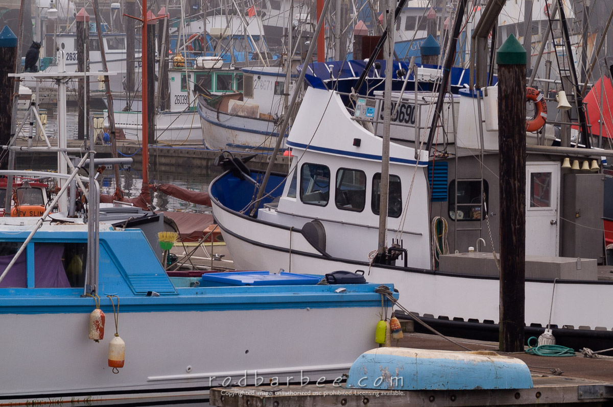 Barbee_030821_1_1026 |  Fishing boats in Charleston Harbor on a foggy morning