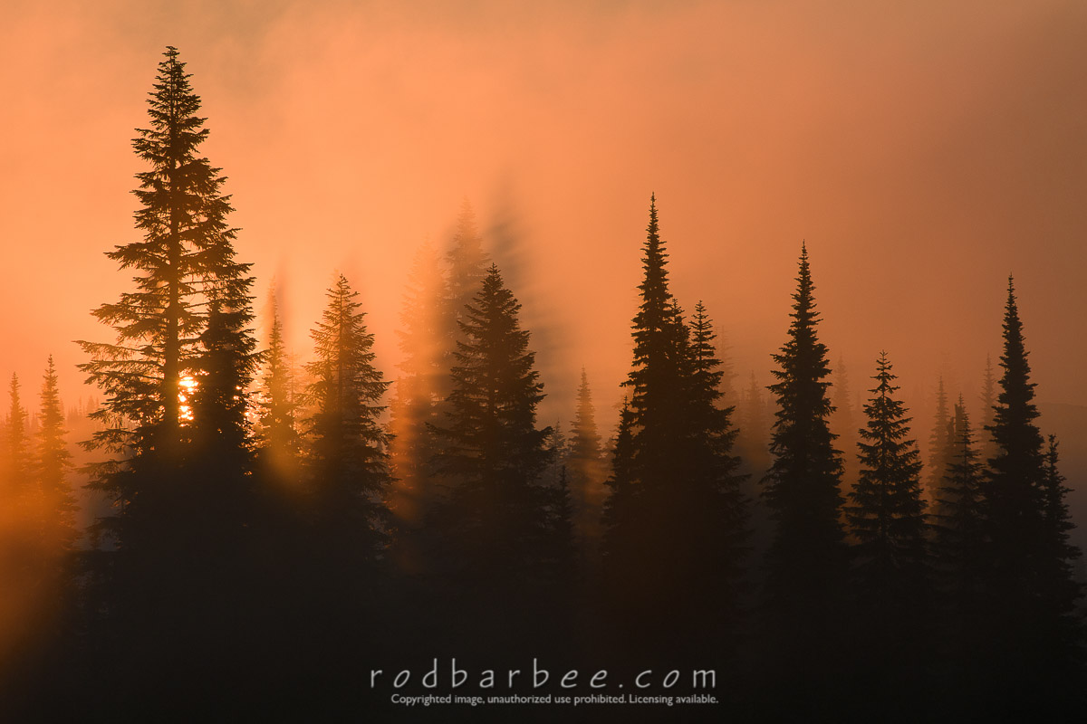 Barbee_100806_3_5390 |  Sun coming through early morning fog in the trees surrounding Reflection Lake in Mt. Rainier National Park